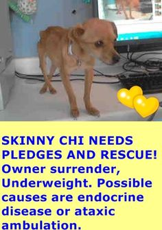 A4803879 My name is Shiby and I'm an approximately 5 year old female chihuahua sh. I am already spayed. I have been at the Baldwin Animal Care Center since May 22, 2015. I am available on May 22, 2015. You can visit me at my temporary home at B540. https://www.facebook.com/photo.php?fbid=874676972612636&set=pb.100002110236304.-2207520000.1432724236.&type=3&theater