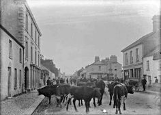 Cattle fair, Ardee, Co. Louth In Collections: Tempest Photographic Collection Format:Photo Published: [ca. 1900-1910]