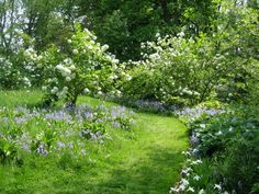 love this path and the side garden. wonder how shade tolerant those plants are. photo by Sue Harris