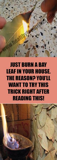 JUST BURN A BAY LEAF IN YOUR HOUSE. THE REASON? YOU'LL WANT TO TRY THIS TRICK RIGHT AFTER READING THIS! – Healthy Food Tricks