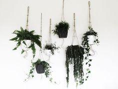 Makramee -  hanging Garden Tutorial inkl. bebilderter Step by Step Anleitung