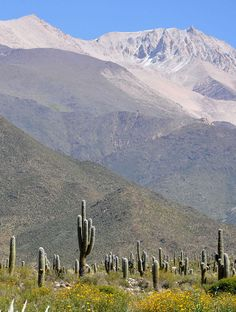 """What to Eat and Drink in Argentina's """"Salta the Beautiful"""""""