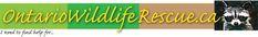 Wildlife rehabilitators directory, Ontario wildlife rehabilitators, Where to find wildlife rehabilitator