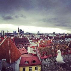 """See 1063 photos from 3756 visitors about scenic views, old town, and historic sites. """"Very nice view to the Old Town but maybe the regular seagull. Historical Sites, Nice View, Old Town, Four Square, Paris Skyline, Old Things, Travel, Old City, Viajes"""
