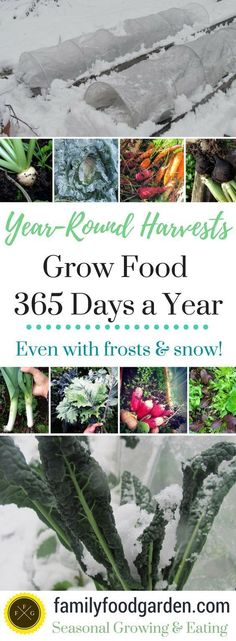Grow Food Year-Round with these tips for season extenders and cold hardy varieties. | Family Food Garden