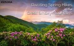 What's more dazzling than the Great Smoky Mountains in spring? We're talking about a proliferation of wildflowers lighting up the slopes, with a varied growing season providing a changing colorscap…