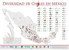 """Great infographic about Mexican chiles, and information about this center of origin: """"Just as Mexico was the center of domestication of maize (now the most consumed cereal in the world) so wa…"""