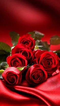 Red Roses for Valentine's
