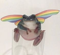 Cute Little Animals, Baby Animals, Funny Animals, Frog Pictures, Frog Pics, Funny Animal Pictures, Frog Art, Cute Frogs, Frog And Toad