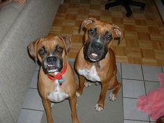 Cleo and Loki