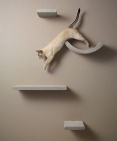 Dote uses recycled materials to create range of minimal cat accessories