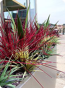 Artificial Plants For Outdoors | Software Office Plants Bristol Plant  Displays Bristol Artificial Plant .