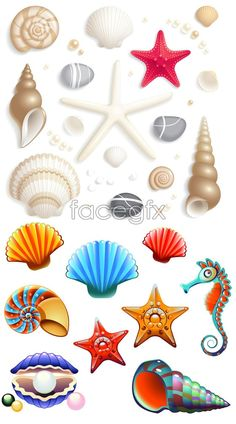 how to draw a seashell dragoart
