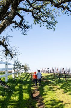 30 Things to do in Napa, CA