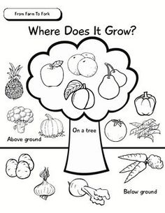 Students Colour Cut And Paste Fruit Vegetable Pictures On The Where Does It Grow
