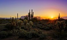 desert sunrise pictures | Desert Winter Sunrise by Saija Lehtonen