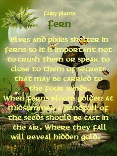 Fairy Plants - Fern translates to ~fascination~ in the Language of Flowers.