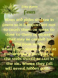 Fairy Plants - Fern