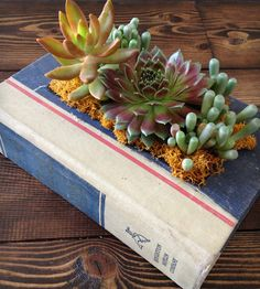 DIY: Upcycled vintage book planter