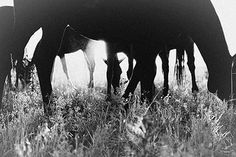 Horses Serie 14