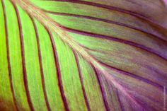 CANNA LILIY 04 2016   Macro Flower Photography   Flower Photography   Photography   Abstract Art   Abstract Photography   Wall Art   Fine Art   Photo Art   Nature Photography   Artful home Abstract Photography, Nature Photography, Flower Photography, Fine Art Photo, Photo Art, Macro Flower, Abstract Art, Lily, Art Nature