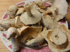 Stuffed Mushrooms, Backyard, Canning, Vegetables, Health, Food, Mushroom, Stuff Mushrooms, Patio