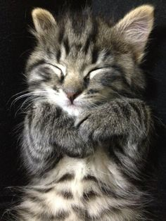 Anyone who doesn't love kitties doesn't have a soul. (Just kidding!)...(not really kidding.)-k