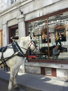 See 163 photos from 1229 visitors about sandwiches, French food, and burgers. French Food, Montreal, Four Square, Horses, Animals, Old Montreal, Shopping, Animales, French Cuisine