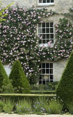 So if my roses grow like this and shape trees, plant lavender, box hedge....easy!