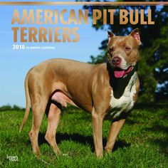 American Pit Bull Terriers 2018 Wall Calendar