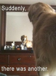 LOL  My dog looooves to stare at herself in the mirror!!  I find it quite funny!!!