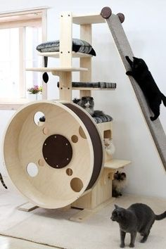 Cats Toys Ideas - looloo The slant wall - I think Ill build one. once we leaned a queen size mattress against a wall and our cat just walked up the side - it was so weird and funny looking! - Ideal toys for small cats Diy Cat Tree, Cat Playground, Playground Design, Indoor Playground, Ideal Toys, Cat Shelves, Unique Cats, Cat Room, Cat Condo