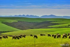 A landscape in the Overberg, South Africa. I Am An African, Leica, Cape Town, In A Heartbeat, South Africa, Landscaping, Southern, Ocean, Sky