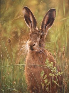 Hare - Carl Whitfield
