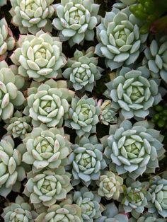 shade loving houseplants list | ... Harbor Farm :: Plants for Connoisseurs :: Greenhouses :: Sun Loving