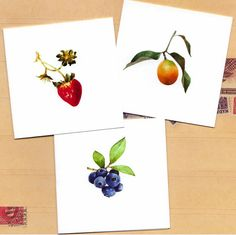 fruit mini note set watercolor reproduction by atticEditions