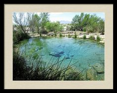 Desert Framed Print featuring the photograph Ash Meadows Pool #1 by Michele Ross