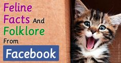 The history of one of the world's most captivating creatures, the cat, is steeped in fascinating folklore. http://healthypets.mercola.com/sites/healthypets/archive/2015/10/10/cat-facts-folklores-from-facebook.aspx