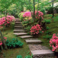 Composiciones con azaleas en el jardín o en maceta