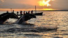 Bali Lovina Dolphin Trip