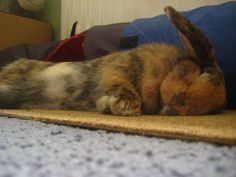 Bunny Naps Flopped Over
