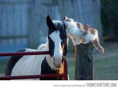 Friendship.....