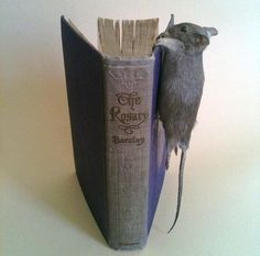 Taxidermy Hanging Mouse by Precious Creature