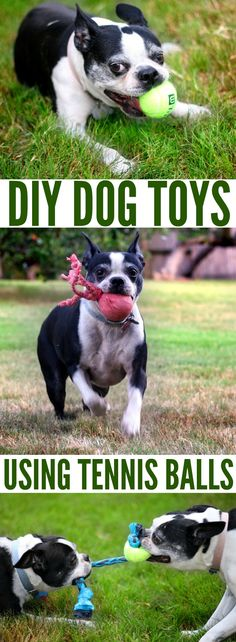 Have your tennis balls lost their bounce? Try one of these simple DIY dog toys using old tennis balls. No sewing or glue gun required! Homemade Dog Toys, Diy Dog Toys, Cat Toys, Love Your Pet, Your Dog, Dog Treat Dispenser, Dog Feeding Station, Schaefer, Dog Accessories