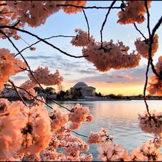 The Jefferson Memorial in Spring