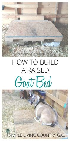 A raised goat bed doesn't need to be fancy and this one definitely isn't. But it is cheap! via @SLcountrygal