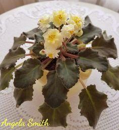 Leafy Plants, Air Plants, Easy House Plants, Saintpaulia, African Violet, Carnivorous Plants, Natural Garden, Companion Planting, Flower Pictures