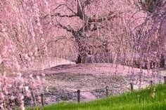「鈴鹿 森庭園」の画像検索結果
