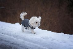 Pets and Winter Weather: What You Can Do to Prepare http://www.pmarinc.org/pets-and-winter-weather-what-you-can-do-to-prepare/