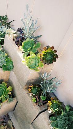 closeup - succulent garden - state of mine blog